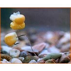 Pop Up Sweetcorn Fluoro Red насадка Enterprise Tackle - Фото
