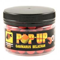 Pop-Ups Gammarus Belachan 10мм 50гр бойлы CC Baits