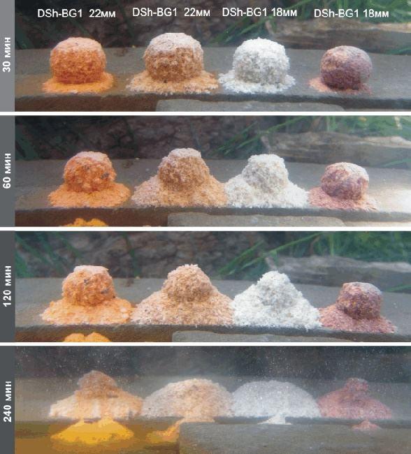 Ловля карпа на бойлы: оснастка, прикормка, выбор места